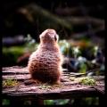 Ansgar Artwork - Animal Portrait Project
