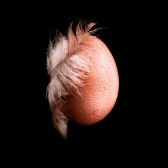 The Egg Closer & Closer Photography Project 2017 Ansgar Artwork
